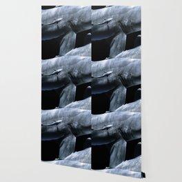 Shark Crossing Wallpaper