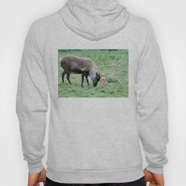 Caribou with Large Antlers Hoody