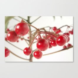 Scarlet Berry  Canvas Print