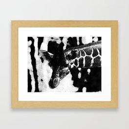 giraffe 151/7 Framed Art Print