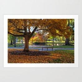 Boston Public Garden Yellow Autumn Tree Boston MA Art Print