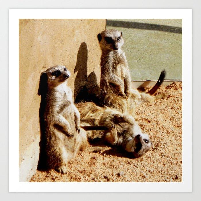 Meerkat Togetherness Art Print