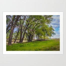 Cottonwoods at Lee's Farm Art Print