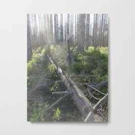 Forest landscape - Tatra National Park Metal Print