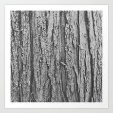 Grey Wood Art Print
