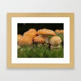 Amanita Colony... Framed Art Print