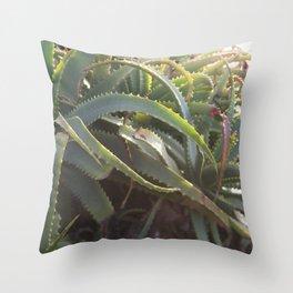 Succulent Smitten 2 Throw Pillow