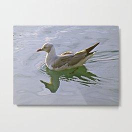 Seagulls Swim Metal Print