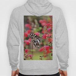 Butterfly in the garden Hoody