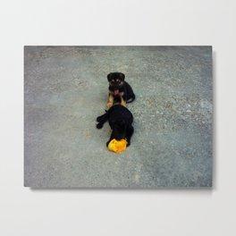 The Doggies and the mango Metal Print