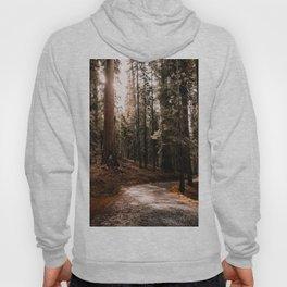 Walking Sequoia 4 Hoody