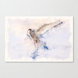 Artic Tern in Flight Canvas Print