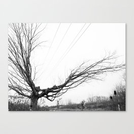Between the lines: Nature vrs Human Canvas Print