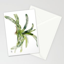 Orchid Paphiopedilum Lady Isabel Stationery Cards