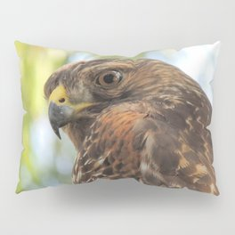 Young Red-Shouldered Hawk in a Desert Willow Pillow Sham