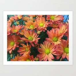 Cream and Pink Fall Flowers Art Print