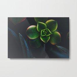 The Succulent Garden 2 Metal Print