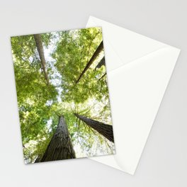 The Redwood National and State Parks Stationery Cards