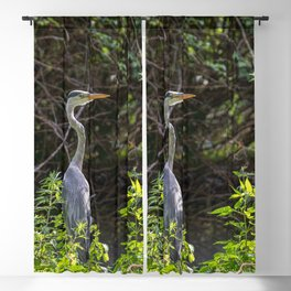 Gray heron on the edge of a pond Blackout Curtain