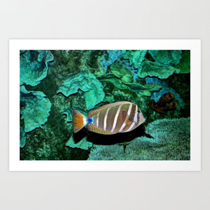 Tropical Fish Art Print by venny