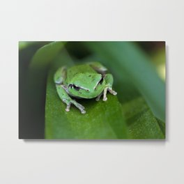 Green frog 20 Metal Print