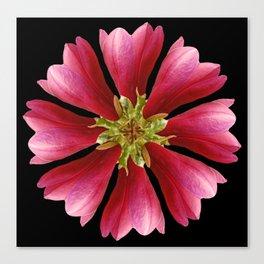 Magnolie Canvas Print