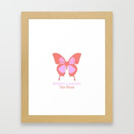 Ulysses Butterfly 7 Framed Art Print