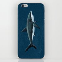 biology iPhone & iPod Skins featuring Carcharodon carcharias  ~ Great White Shark by Amber Marine