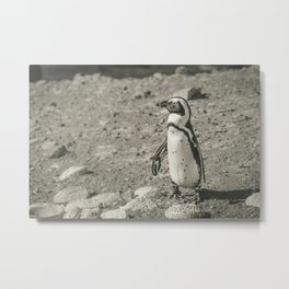 Black and White African Penguin - Photography #Society6 Metal Print