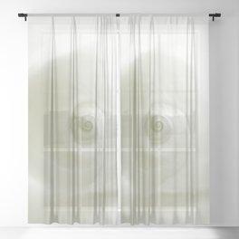 Beautiful White Shell #society #decor #buyart Sheer Curtain