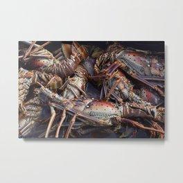 Lobsters, Anegada, BVI  Metal Print