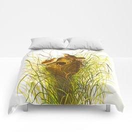 Nuttall's lesser-marsh Wren Comforters