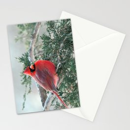 Red on Red: Northern Cardinal Stationery Cards