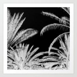 Palm Trees B&W Art Print