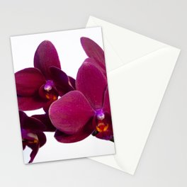 Orchid Flowers 09 Stationery Cards