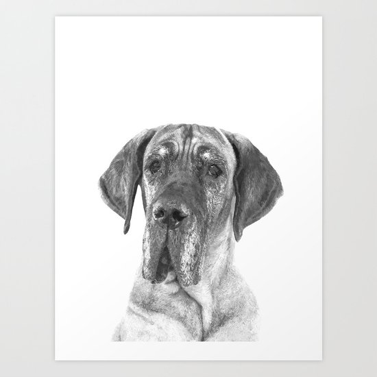 Black and White Great Dane by alemi