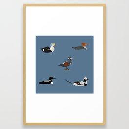 Ducks and a Loon Framed Art Print