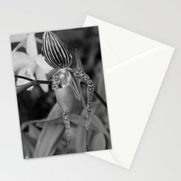 A Slipper in the Shadows Stationery Cards