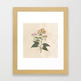 Honesty - botanical Framed Art Print