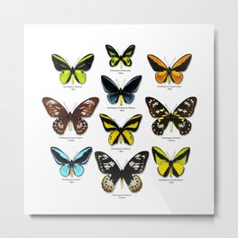 Butterfly012_Ornithoptera Set1 on White Background Metal Print