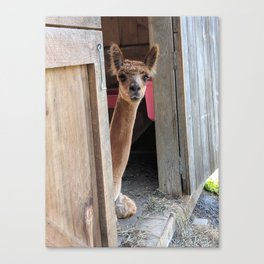 Why Hello! Canvas Print