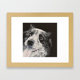 Border Collie, blue merle. Framed Art Print