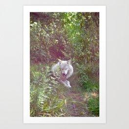 Wolf Relaxation Art Print