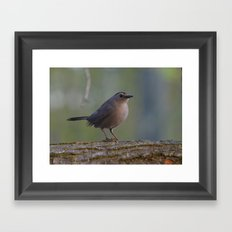 Gray Catbird near Sunrise Framed Art Print