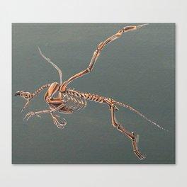 Gryphon Skeleton Anatomy No Labels Canvas Print