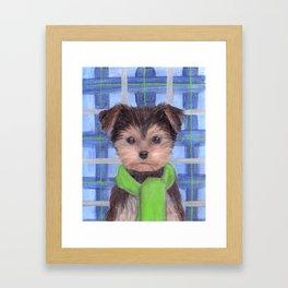 Yorkie Poo in Scarf Framed Art Print