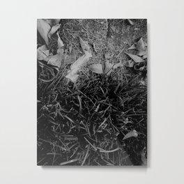 Feathers Found 10 jjhelene Metal Print