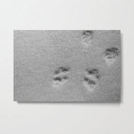 rabbit tracks (follow me) Metal Print