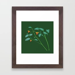 Jewel weed - illustration Framed Art Print