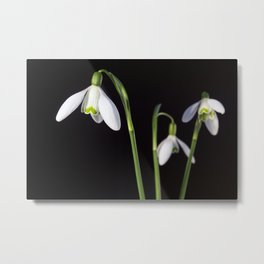 Spring Comes to a Wall Near You. Metal Print